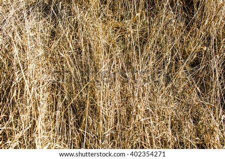 green grass and dry grass / Dying Grass / hay dry grass background / withered yellow grass field at autumn / dry grass as background / Dry turf grass texture - stock photo