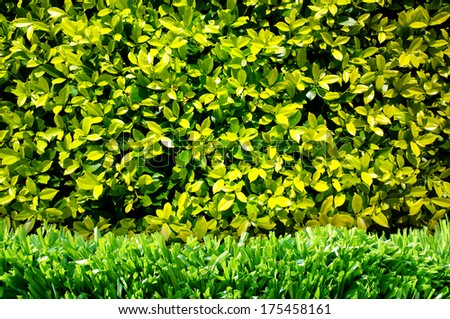 green grass and green wall - stock photo