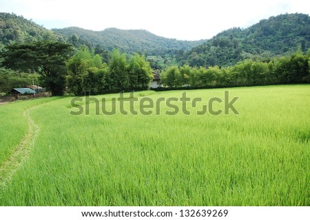 green grass and mountains Thailand Chang Mai - stock photo