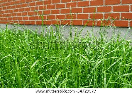 green grass and red brick wall - stock photo