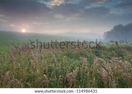 green grass and rising sun in morning mist