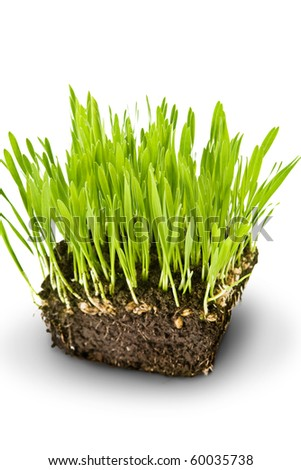 Green grass and roots - stock photo