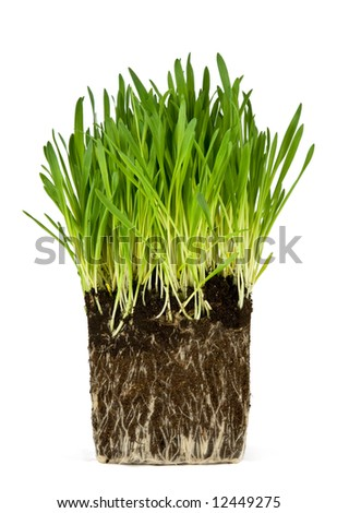 Green grass and roots isolated on white background - stock photo