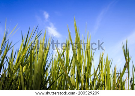 Green grass and sky background.