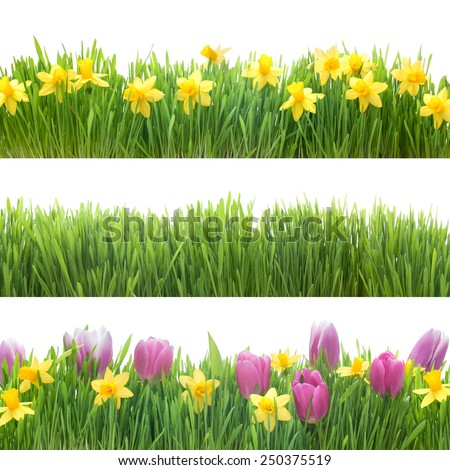 Green grass and spring flowers isolated on white background - stock photo
