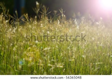 green grass and sun - stock photo