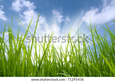 green grass and sun,environmental protection concept - stock photo