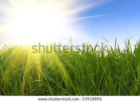 green grass and sun rays - stock photo
