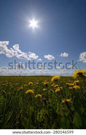 green grass and sun, rural landscape - stock photo