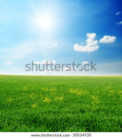 green grass and sun sky - after a rain
