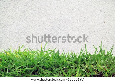green grass and white sand - stock photo