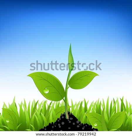 Green Grass And Young Plant - stock photo