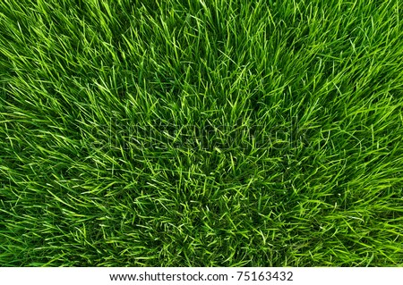 green grass at spring - stock photo