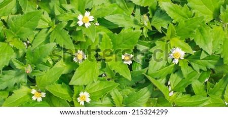 Green grass background - stock photo