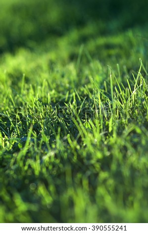 green grass  background,  fresh  spring de-focus  - stock photo