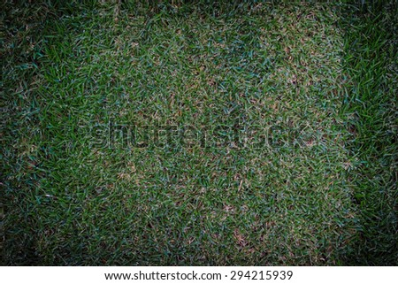 Green grass background in the park
