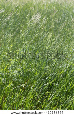 Green grass background. Meadow in the wind - stock photo