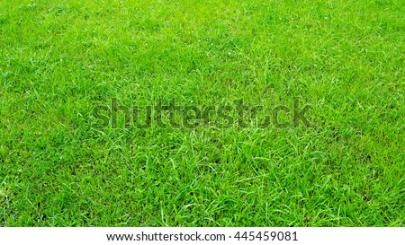 Green grass background. Selective focus with shallow depth of field. - stock photo