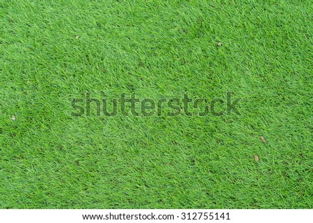 Green grass background texture. - stock photo