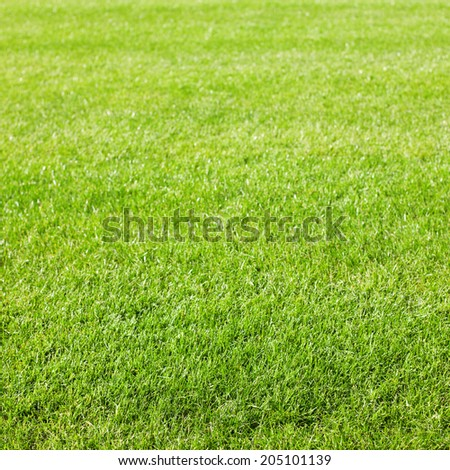 Green grass background texture with diminishing focus. Grass field for various summer sports concept - stock photo