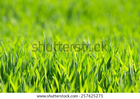 green grass background with selective focus