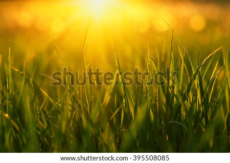 Green grass background with sun beam. Bright natural bokeh. Soft focus. Abstract nature background . - stock photo
