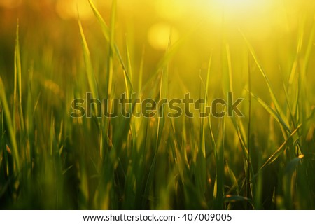 Bright Vibrant Green Grass Closeup Stock Photo 135764927 ...