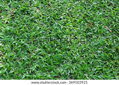 Green grass backgrounds - stock photo