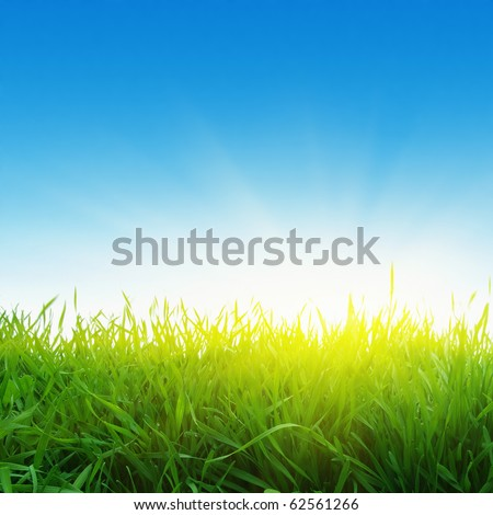 Green grass,blue sky and sun. - stock photo