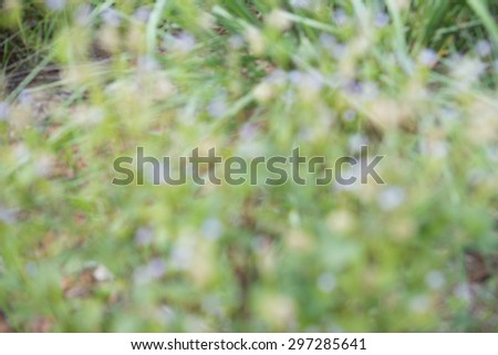 green grass blur background ,blur image of Abstract tree