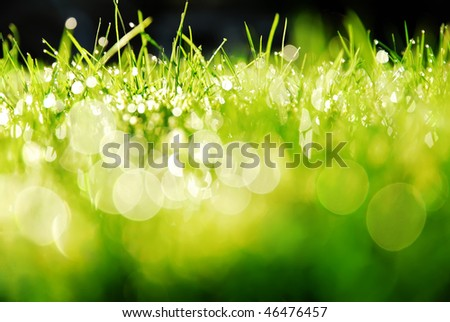 Green grass bokeh - stock photo