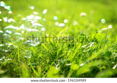 Green grass close-up and soap bubbles
