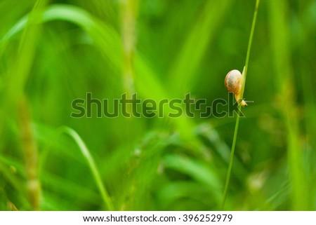 Green grass, close-up of a snail - stock photo