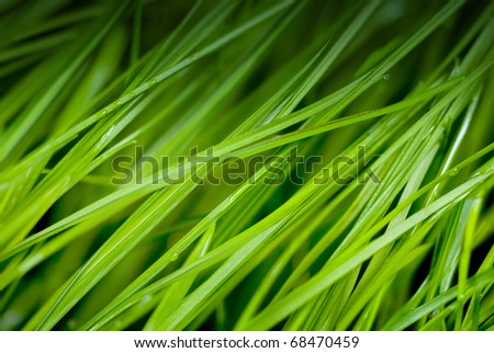 green grass close up with dew drops