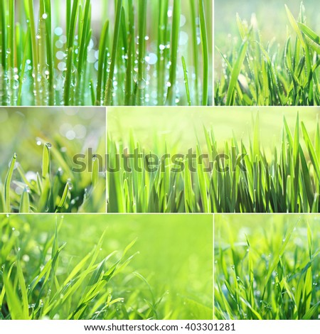Green grass collage