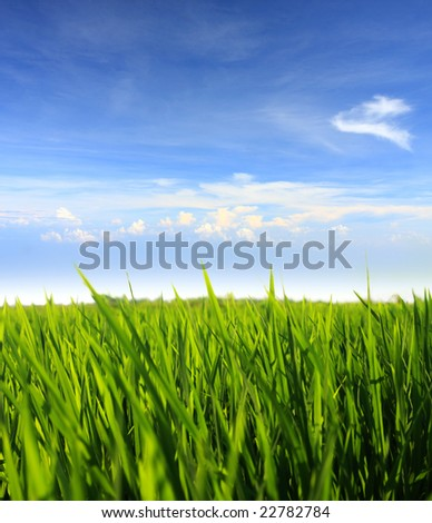 green grass field against blue sky