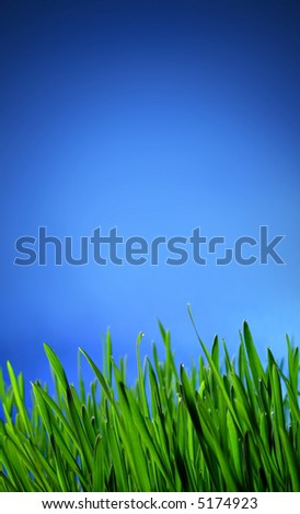 Green Grass Field and clear sky. open field