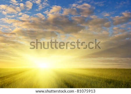 green grass field and dramatic cloudy sky at sunset