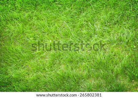 Green grass field background texture - stock photo