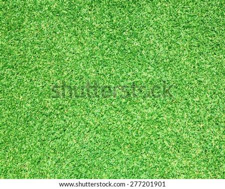 Green grass field background texture. - stock photo