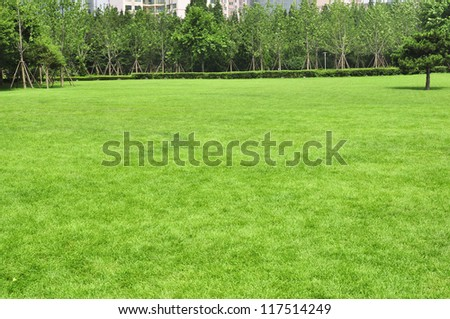 Green grass field , Golf course concept - stock photo