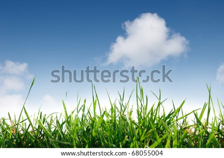green grass field in blue sky background - stock photo