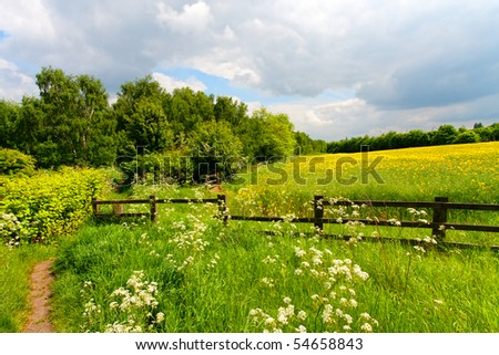 Green grass field landscape - stock photo