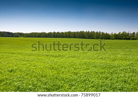 Green grass field under a blue bright sky - stock photo