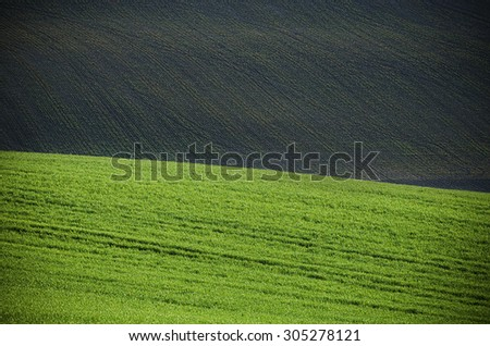 Green grass field with black ground  suitable for eco backgrounds or wallpapers, natural seasonal landscape