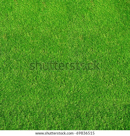 green grass from golf course - stock photo