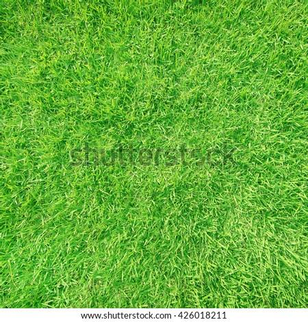 green grass,grass texture,grass for background - stock photo