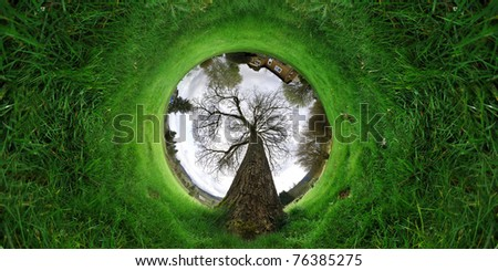 Green grass growing around a tunnel with a massive old tree in the middle of it. - stock photo