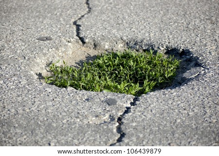 Green grass growing from the Asphalt, broken from the force of Nature - stock photo