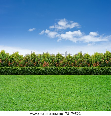 Green grass, hedge and tree on cloudy sky - stock photo